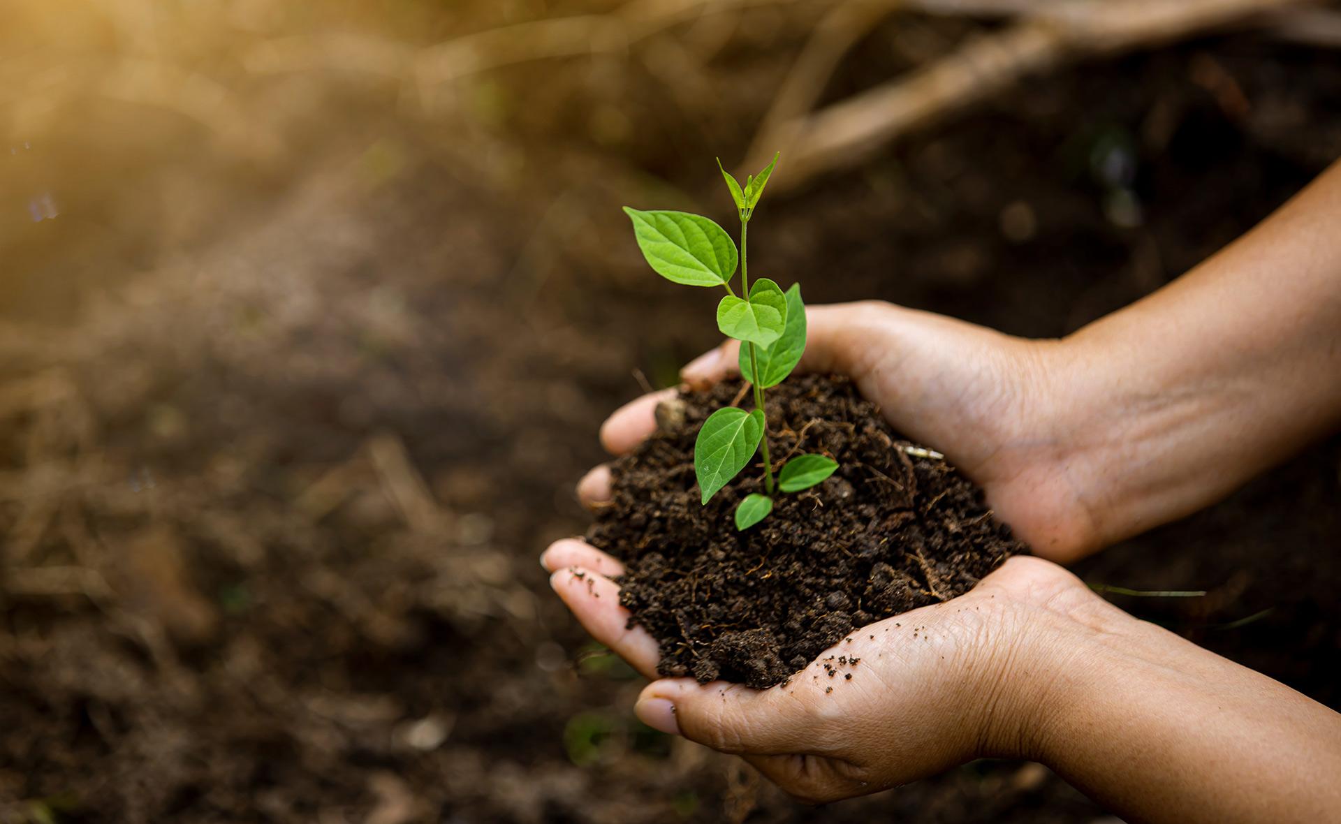 Garanti BBVA fait don d'un million de jeunes arbres à la Turquie
