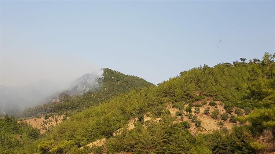 Six personnes arrêtées pour « avoir allumé des incendies » à Muğla