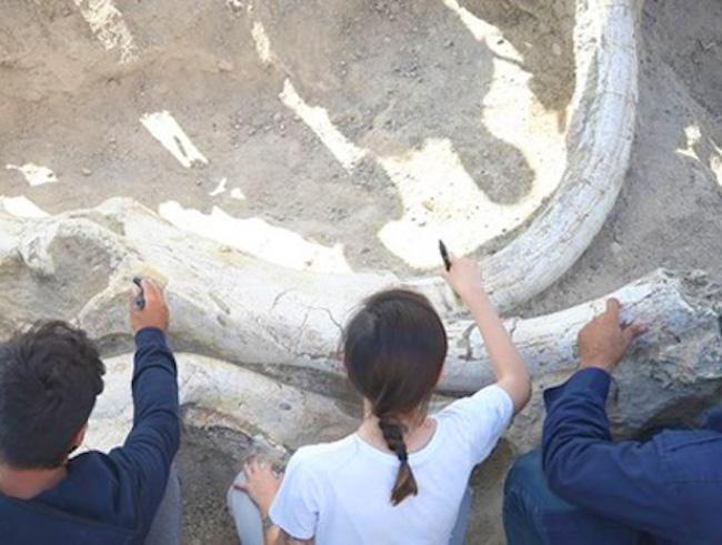 Ils découvrent en Turquie un fossile unique de mammouth de 7,5 millions d'années