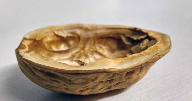 Coquille de noix