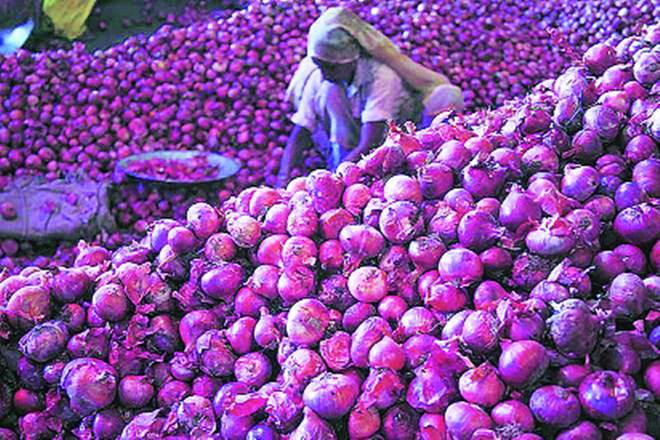 L'Inde importera 12 500 tonnes d'oignons de Turquie