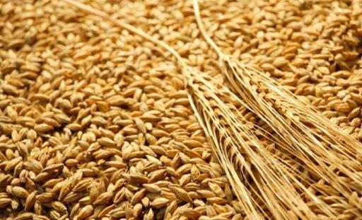 La Turquie achète provisoirement environ 175 000 tonnes de blé dans le cadre d'appels d'offres