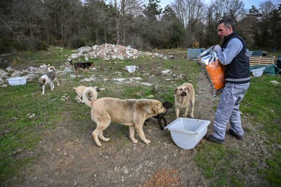 La Turquie protège les animaux des rues dans le cadre de la propagation du virus