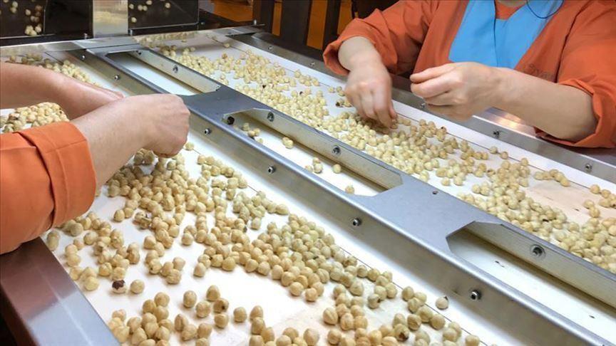 Les exportations de noisettes récoltent 2,2 milliards de dollars en septembre-juillet
