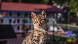 """Turquie : Un """"appartement pour chat"""""""